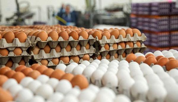 صادرات تخم مرغ متوقف شده است؟